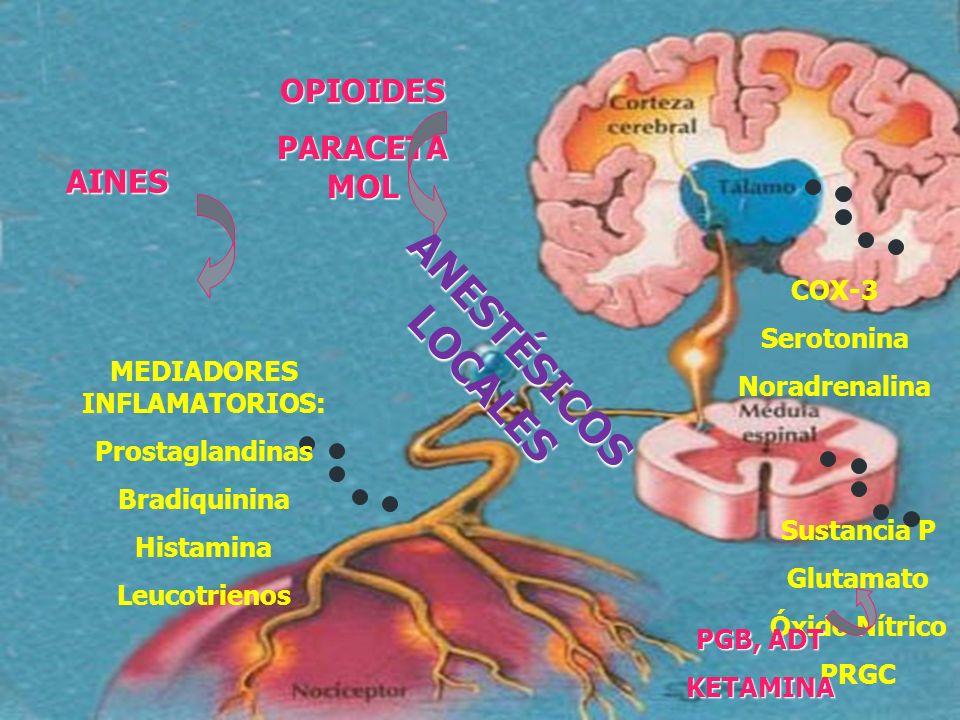 MEDIADORES INFLAMATORIOS: Prostaglandinas Bradiquinina Histamina Leucotrienos Sustancia P Glutamato Óxido Nítrico PRGC COX-3 Serotonina Noradrenalina
