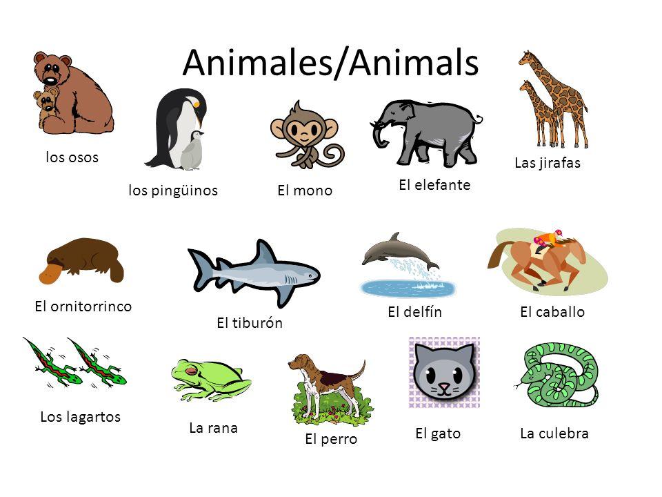 Animales/Animals los osos los pingüinos Las jirafas El elefante El ornitorrinco El tiburón El delfínEl caballo Los lagartos La rana El mono El perro El gatoLa culebra
