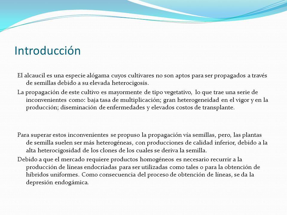 Introducción El alcaucil es una especie alógama cuyos cultivares no son aptos para ser propagados a través de semillas debido a su elevada heterocigos