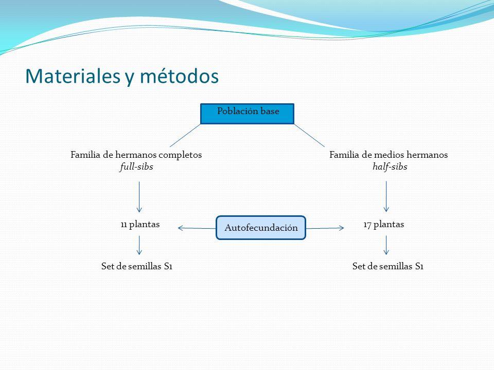 Materiales y métodos Población base Familia de hermanos completos full-sibs Familia de medios hermanos half-sibs 11 plantas17 plantas Set de semillas