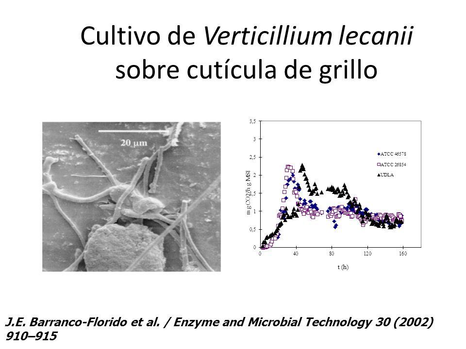 Cultivo de Verticillium lecanii sobre cutícula de grillo J.E. Barranco-Florido et al. / Enzyme and Microbial Technology 30 (2002) 910–915