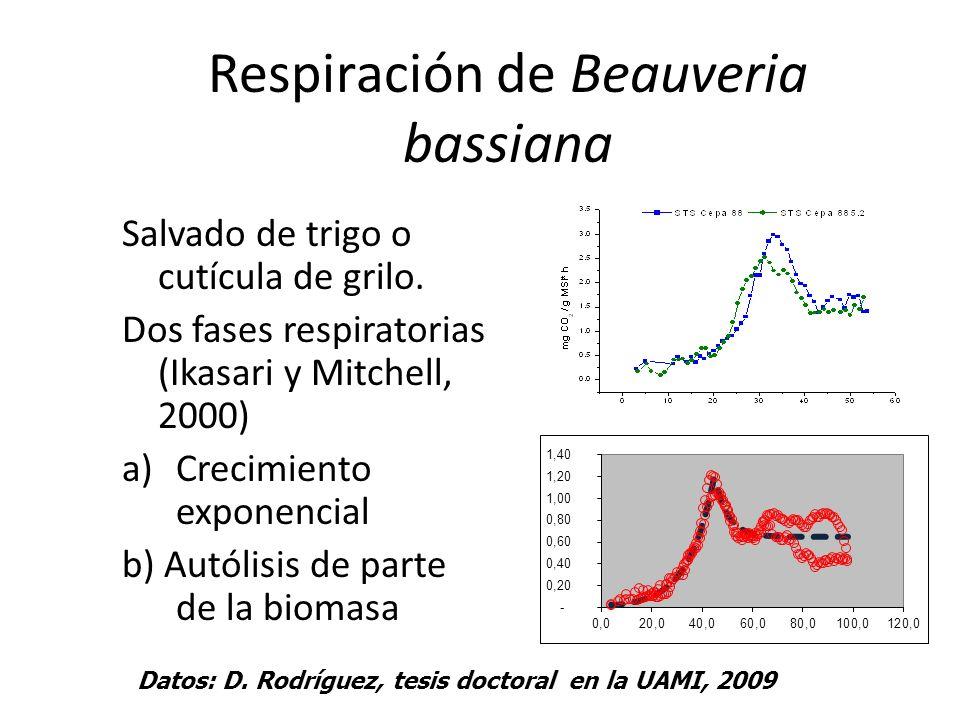 Respiración de Beauveria bassiana Salvado de trigo o cutícula de grilo. Dos fases respiratorias (Ikasari y Mitchell, 2000) a)Crecimiento exponencial b