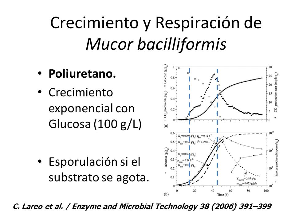 Crecimiento y Respiración de Mucor bacilliformis Poliuretano. Crecimiento exponencial con Glucosa (100 g/L) Esporulación si el substrato se agota. C.