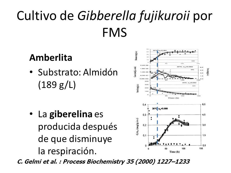 Cultivo de Gibberella fujikuroii por FMS Amberlita Substrato: Almidón (189 g/L) La giberelina es producida después de que disminuye la respiración. C.