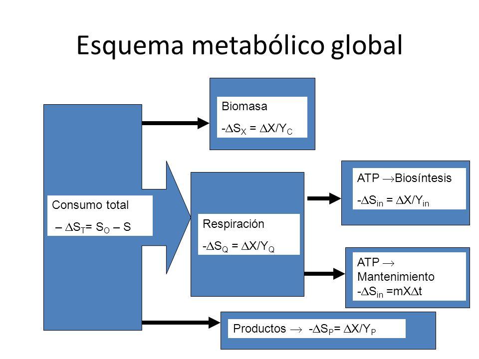 Esquema metabólico global Consumo total – S T = S O – S Biomasa - S X = X/Y C Respiración - S Q = X/Y Q ATP Biosíntesis - S in = X/Y in ATP Mantenimie