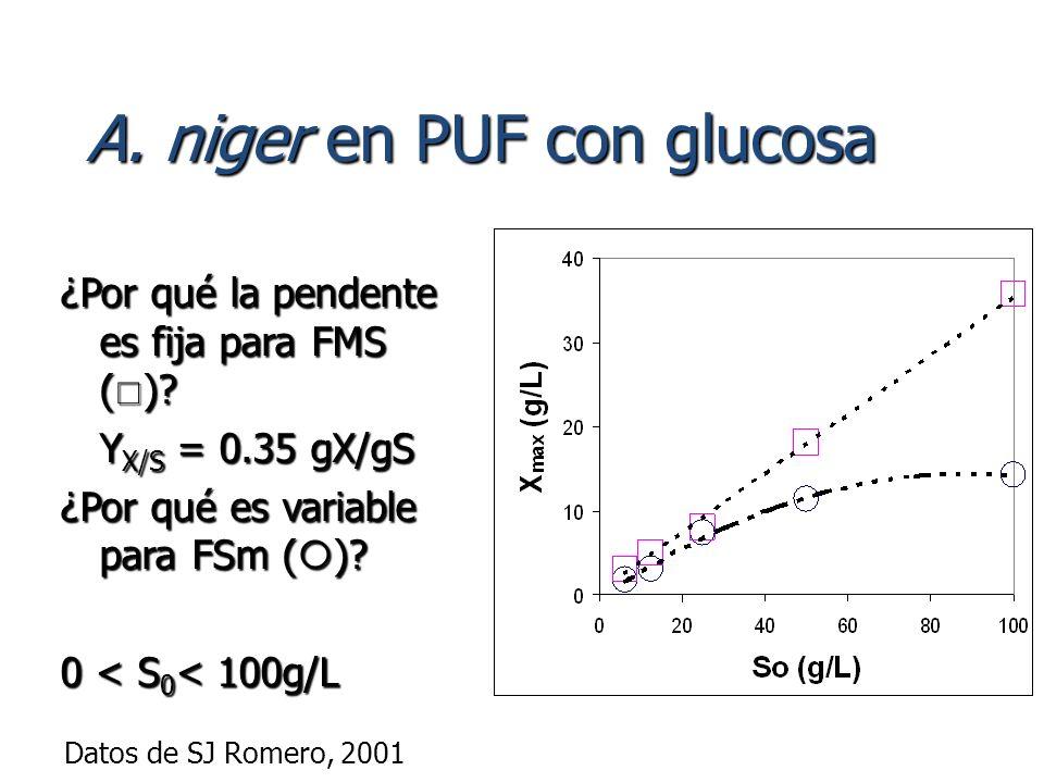 A. niger en PUF con glucosa ¿Por qué la pendente es fija para FMS ( )? Y X/S = 0.35 gX/gS ¿Por qué es variable para FSm ( )? 0 < S 0 < 100g/L Datos de