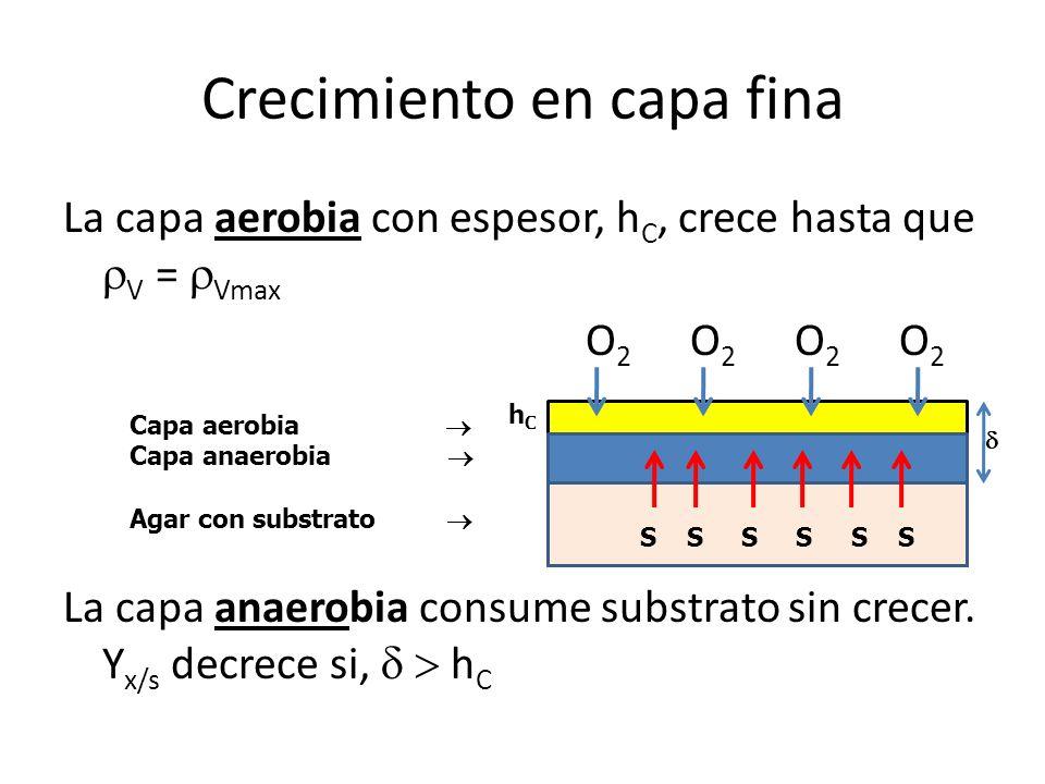 Crecimiento en capa fina La capa aerobia con espesor, h C, crece hasta que V = Vmax O 2 O 2 La capa anaerobia consume substrato sin crecer. Y x/s decr
