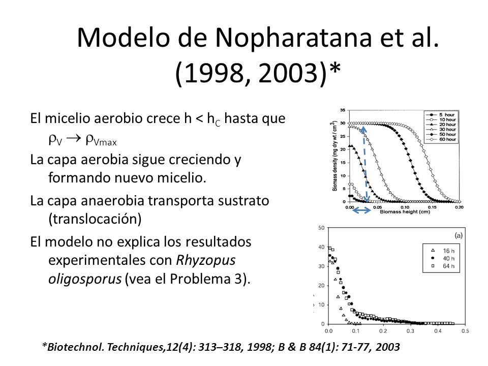 Modelo de Nopharatana et al. (1998, 2003)* El micelio aerobio crece h < h C hasta que V Vmax La capa aerobia sigue creciendo y formando nuevo micelio.