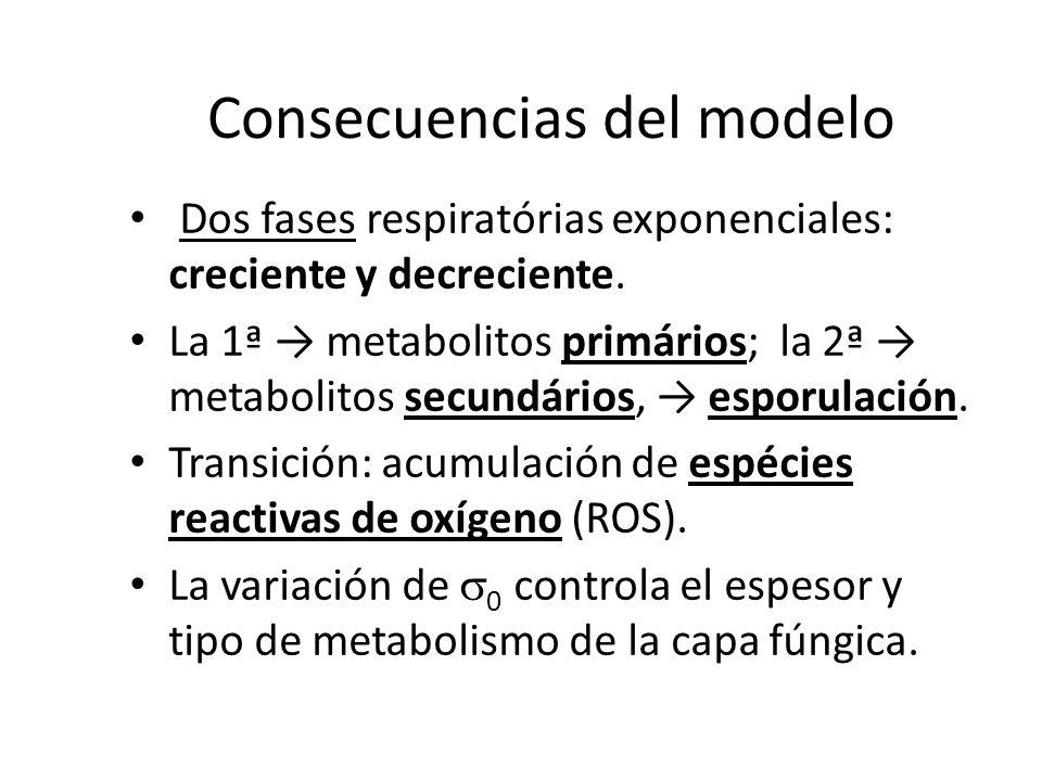 Consecuencias del modelo Dos fases respiratórias exponenciales: creciente y decreciente. La 1ª metabolitos primários; la 2ª metabolitos secundários, e