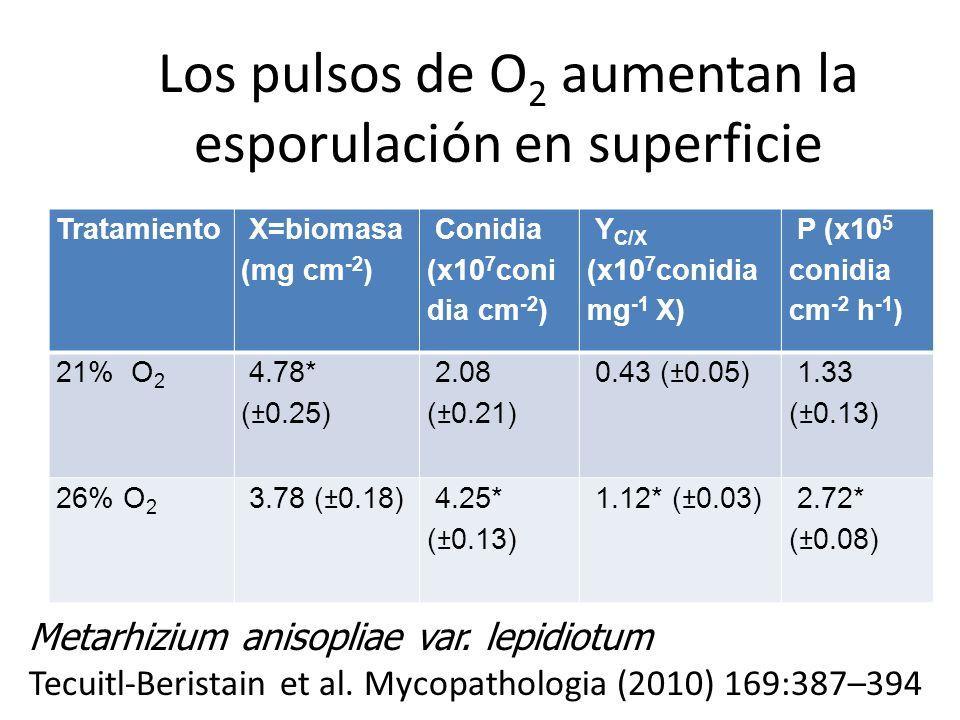 Los pulsos de O 2 aumentan la esporulación en superficie Tratamiento X=biomasa (mg cm -2 ) Conidia (x10 7 coni dia cm -2 ) Y C/X (x10 7 conidia mg -1
