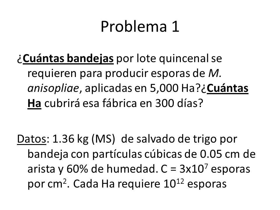 Problema 1 ¿Cuántas bandejas por lote quincenal se requieren para producir esporas de M. anisopliae, aplicadas en 5,000 Ha?¿Cuántas Ha cubrirá esa fáb