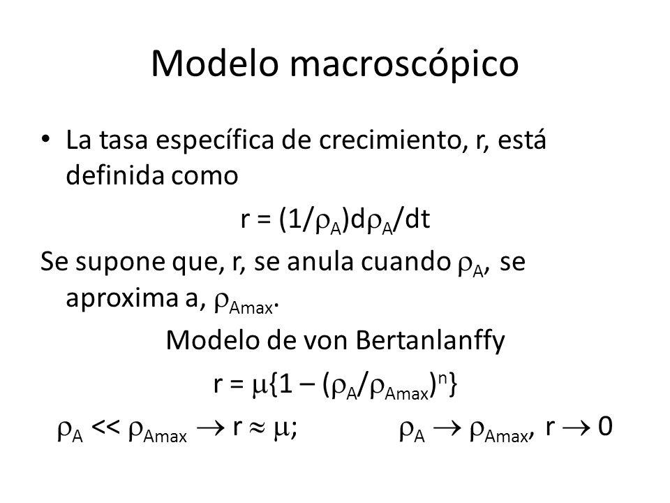 Modelo macroscópico La tasa específica de crecimiento, r, está definida como r = (1/ A )d A /dt Se supone que, r, se anula cuando A, se aproxima a, Am