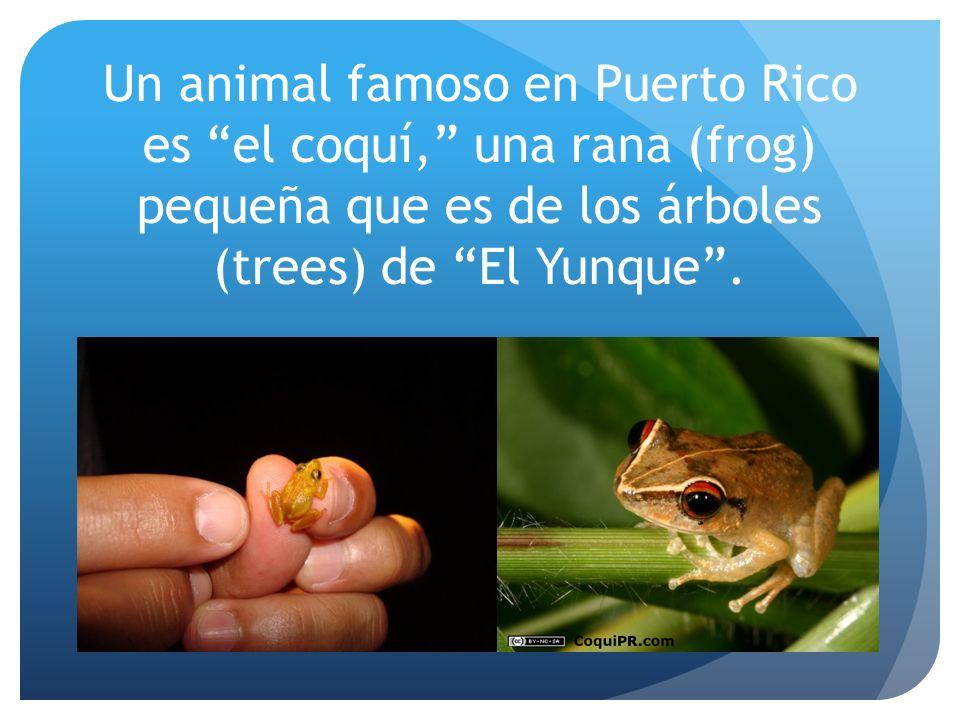 Un animal famoso en Puerto Rico es el coquí, una rana (frog) pequeña que es de los árboles (trees) de El Yunque.