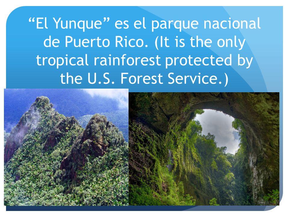 El Yunque es el parque nacional de Puerto Rico. (It is the only tropical rainforest protected by the U.S. Forest Service.)