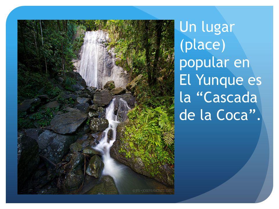 Un lugar (place) popular en El Yunque es la Cascada de la Coca.