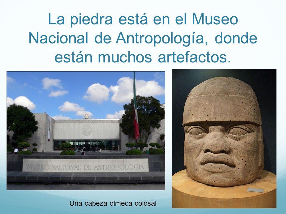 La piedra está en el Museo Nacional de Antropología, donde están muchos artefactos. Una cabeza olmeca colosal