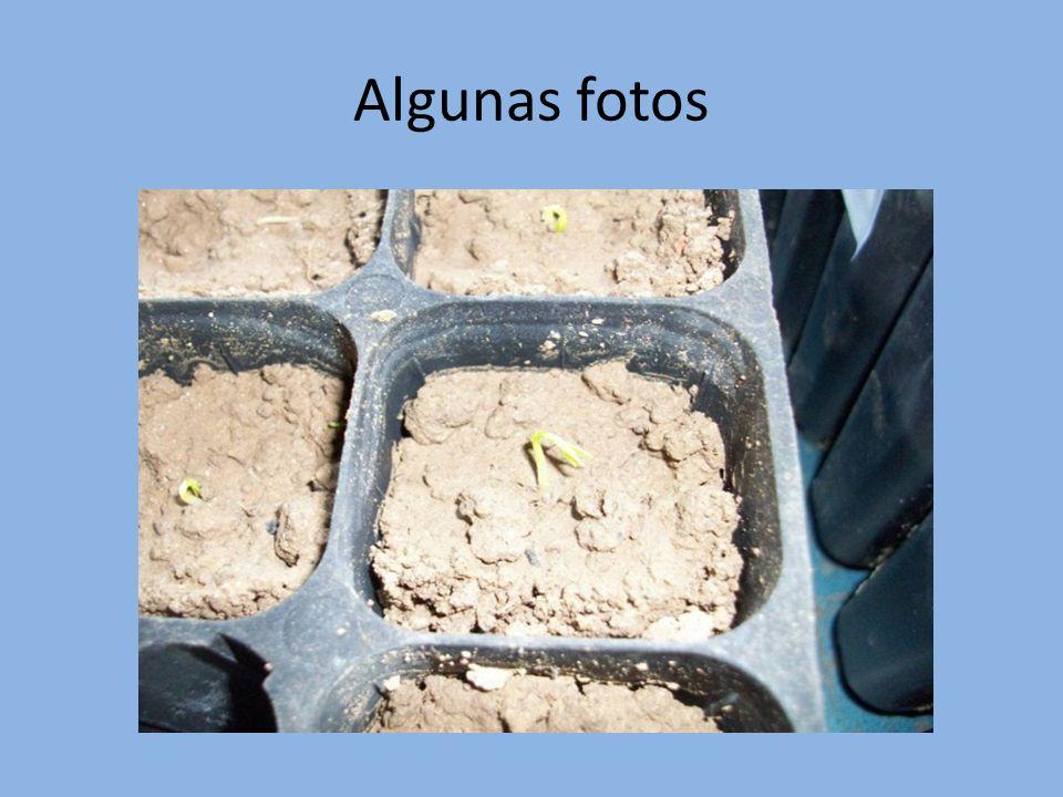 Resultados El nitrato potásico hace que las plantas crezcan más.