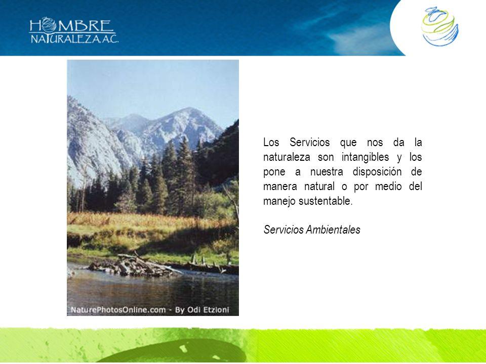 Los Servicios que nos da la naturaleza son intangibles y los pone a nuestra disposición de manera natural o por medio del manejo sustentable. Servicio