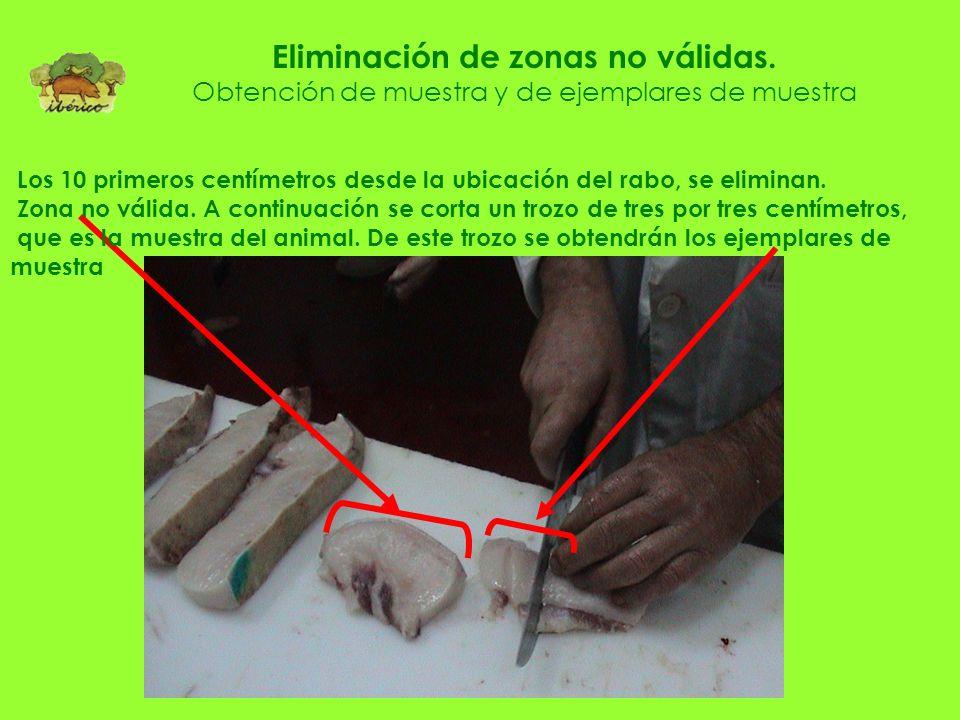 Muestras obtenidas de rabadilla para obtención de ejemplares de muestra