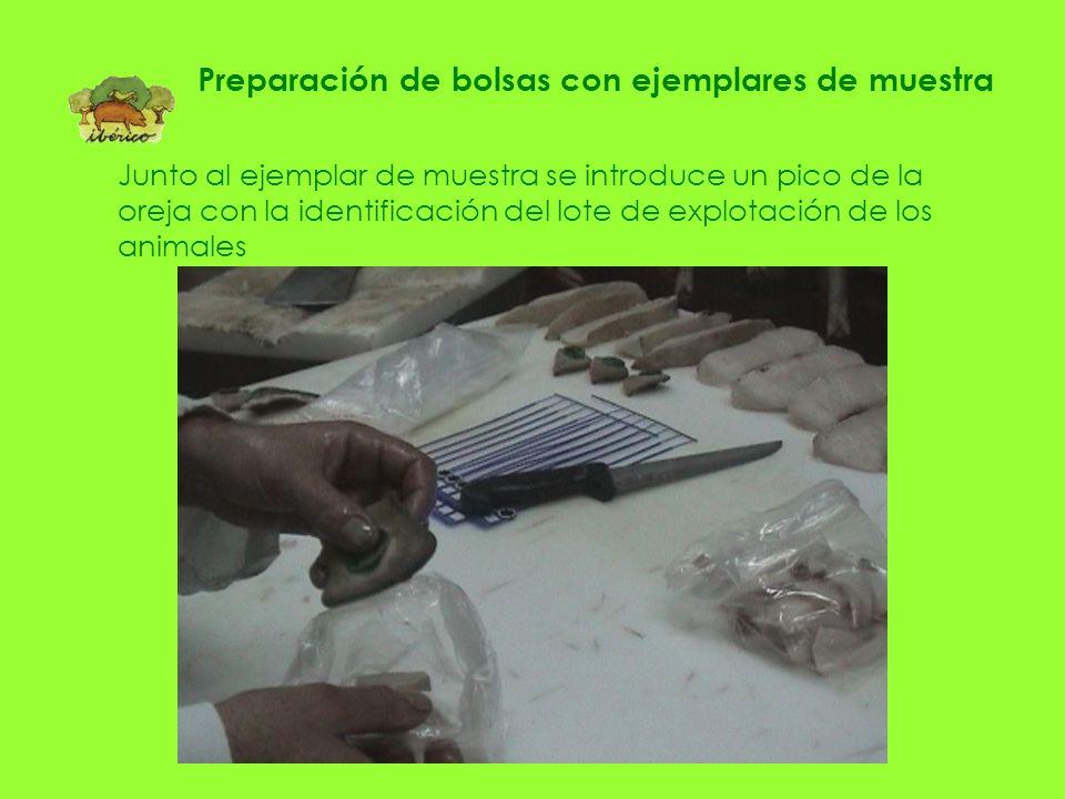 Cada ejemplar de muestra se introduce en una bolsa ASICI. INTERPROFESIONAL DEL CERDO IBÉRICO