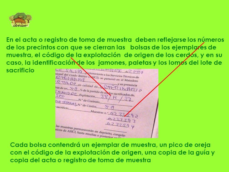 El controlador levanta acta o registro de la toma de muestra, a la que acompaña copia de la Guía de Origen y Sanidad animal. Toma de muestra sobre can