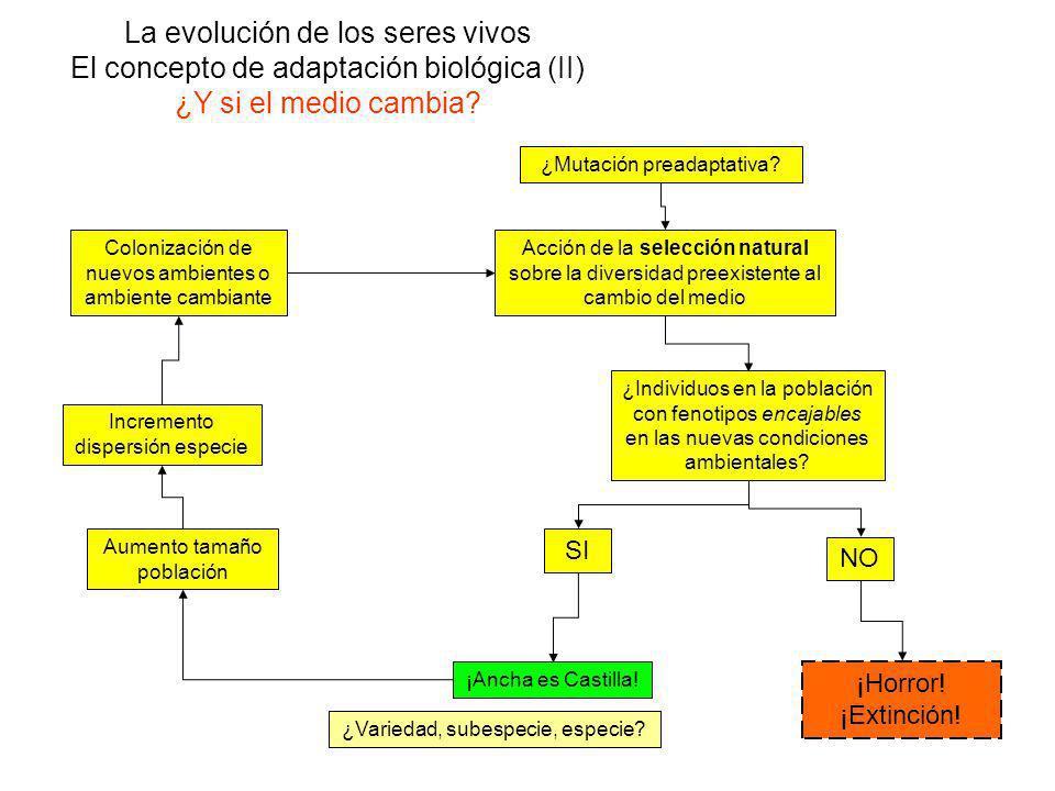 La evolución de los seres vivos El concepto de adaptación biológica (II) ¿Y si el medio cambia.