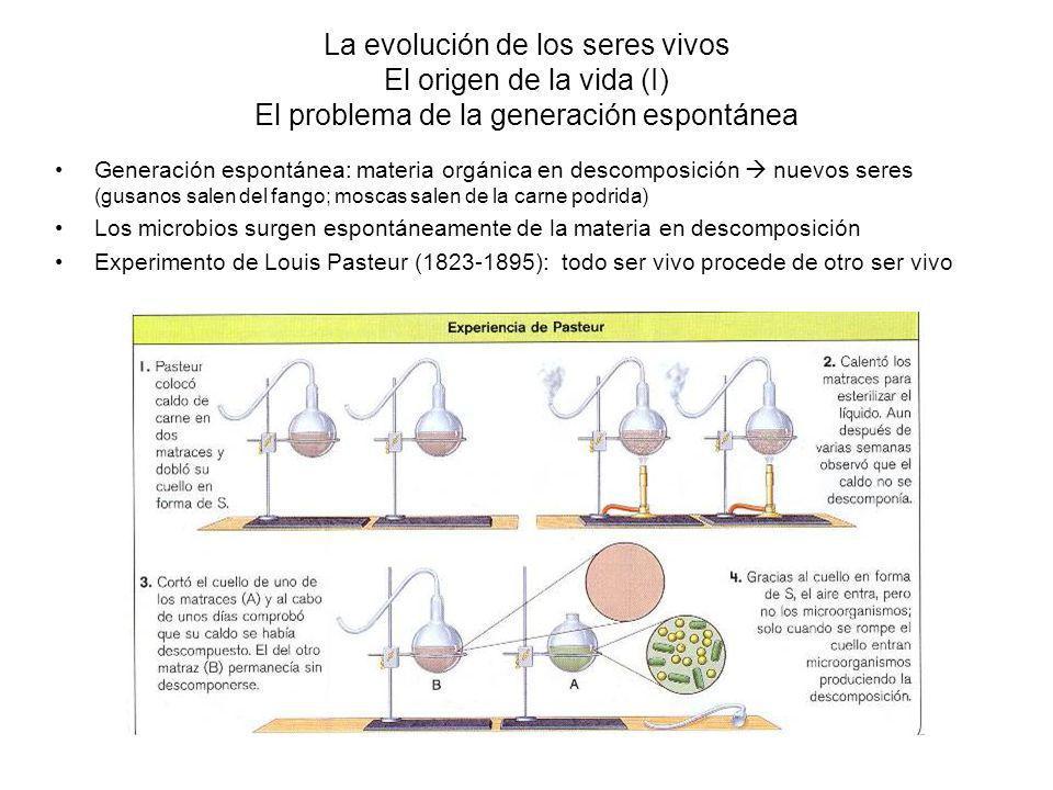 La evolución de los seres vivos El origen de la vida (I) El problema de la generación espontánea Generación espontánea: materia orgánica en descomposición nuevos seres (gusanos salen del fango; moscas salen de la carne podrida) Los microbios surgen espontáneamente de la materia en descomposición Experimento de Louis Pasteur (1823-1895): todo ser vivo procede de otro ser vivo