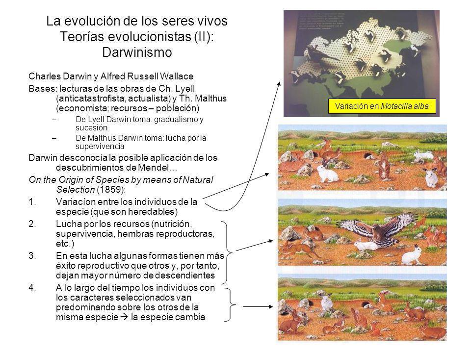 La evolución de los seres vivos Argumentos a favor (I) Registro fósil: rastros de cambios graduales entre especies que permiten establecer parentescos evolutivos (árboles filogenéticos) Distribución geográfica: Especies muy parecidas ubicadas en continentes muy separados.