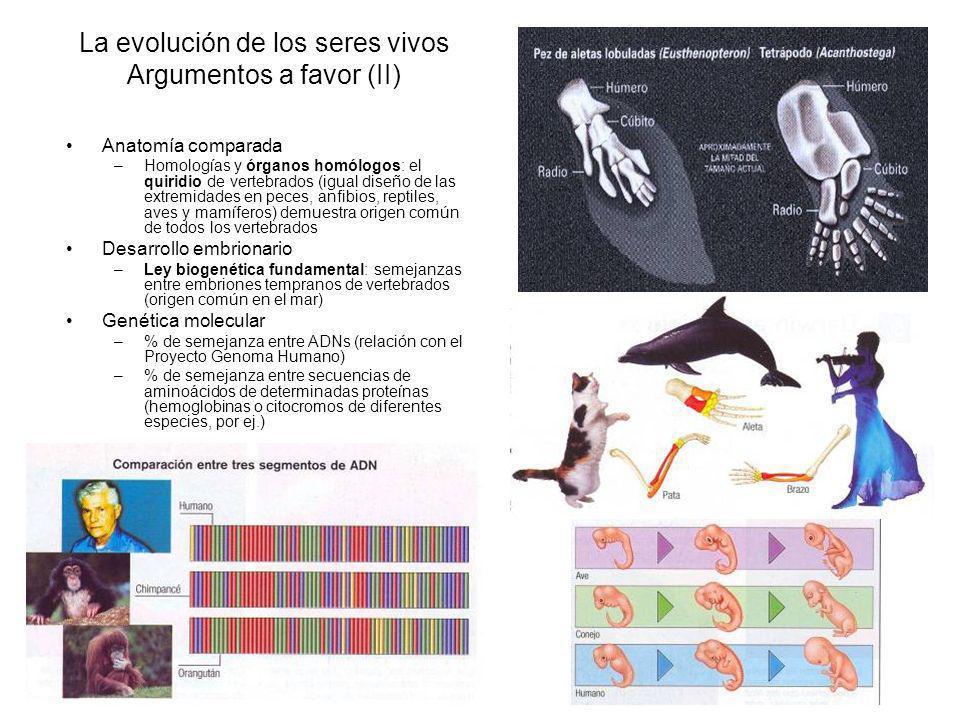 La evolución de los seres vivos Argumentos a favor (II) Anatomía comparada –Homologías y órganos homólogos: el quiridio de vertebrados (igual diseño de las extremidades en peces, anfibios, reptiles, aves y mamíferos) demuestra origen común de todos los vertebrados Desarrollo embrionario –Ley biogenética fundamental: semejanzas entre embriones tempranos de vertebrados (origen común en el mar) Genética molecular –% de semejanza entre ADNs (relación con el Proyecto Genoma Humano) –% de semejanza entre secuencias de aminoácidos de determinadas proteínas (hemoglobinas o citocromos de diferentes especies, por ej.)