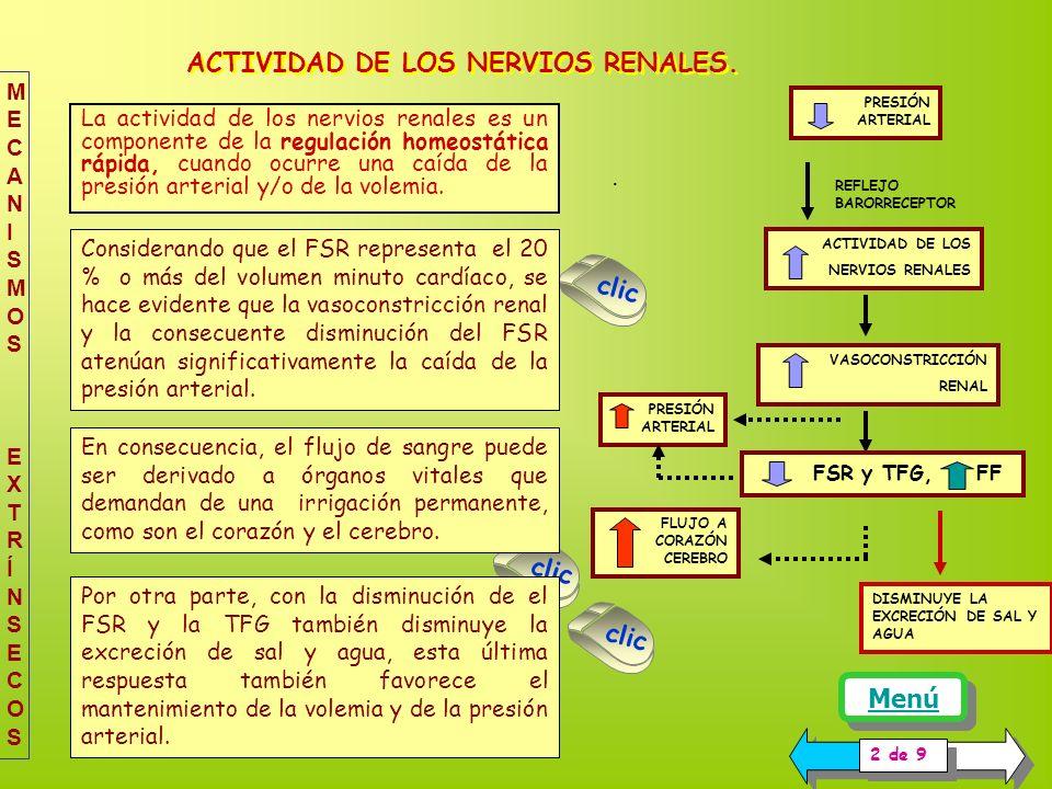 PRESIÓN ARTERIAL FLUJO A CORAZÓN CEREBRO ACTIVIDAD DE LOS NERVIOS RENALES PRESIÓN ARTERIAL REFLEJO BARORRECEPTOR VASOCONSTRICCIÓN RENAL FSR y TFG, FF ACTIVIDAD DE LOS NERVIOS RENALES.