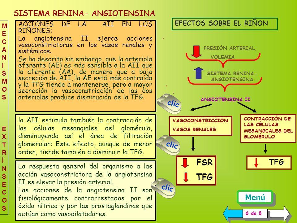 SISTEMA RENINA- ANGIOTENSINA PRESIÓN ARTERIAL, VOLEMIA SISTEMA RENINA- ANGIOTENSINA VASOCONSTRICCION VASOS RENALES CONTRACCIÓN DE LAS CÉLULAS MESANGIALES DEL GLOMÉRULO ANGIOTENSINA II TFG EFECTOS SOBRE EL RIÑON 6 de 8 la AII estimula también la contracción de las células mesangiales del glomérulo, disminuyendo así el área de filtración glomerular: Este efecto, aunque de menor orden, tiende también a disminuir la TFG.