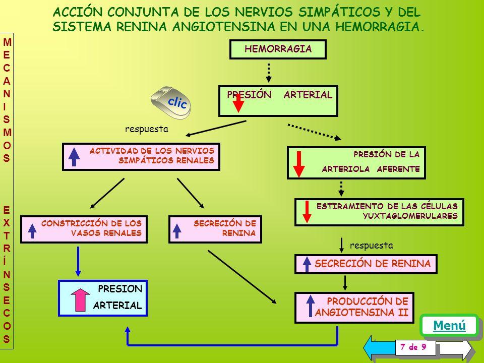 PRESION ARTERIAL ACCIÓN CONJUNTA DE LOS NERVIOS SIMPÁTICOS Y DEL SISTEMA RENINA ANGIOTENSINA EN UNA HEMORRAGIA.
