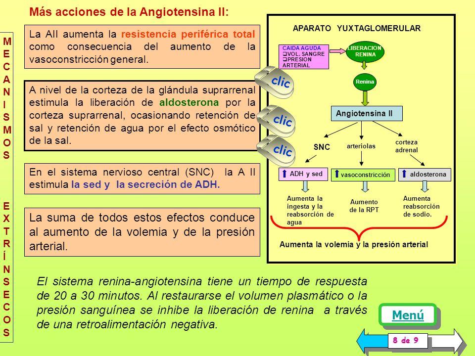 PRESION ARTERIAL ACCIÓN CONJUNTA DE LOS NERVIOS SIMPÁTICOS Y DEL SISTEMA RENINA ANGIOTENSINA EN UNA HEMORRAGIA. SECRECIÓN DE RENINA PRODUCCIÓN DE ANGI