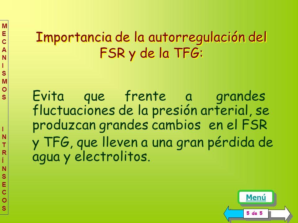 Importancia de la autorregulación del FSR y de la TFG: Evita que frente a grandes fluctuaciones de la presión arterial, se produzcan grandes cambios en el FSR y TFG, que lleven a una gran pérdida de agua y electrolitos.