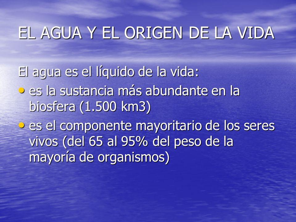EL AGUA Y EL ORIGEN DE LA VIDA El agua es el líquido de la vida: es la sustancia más abundante en la biosfera (1.500 km3) es la sustancia más abundant