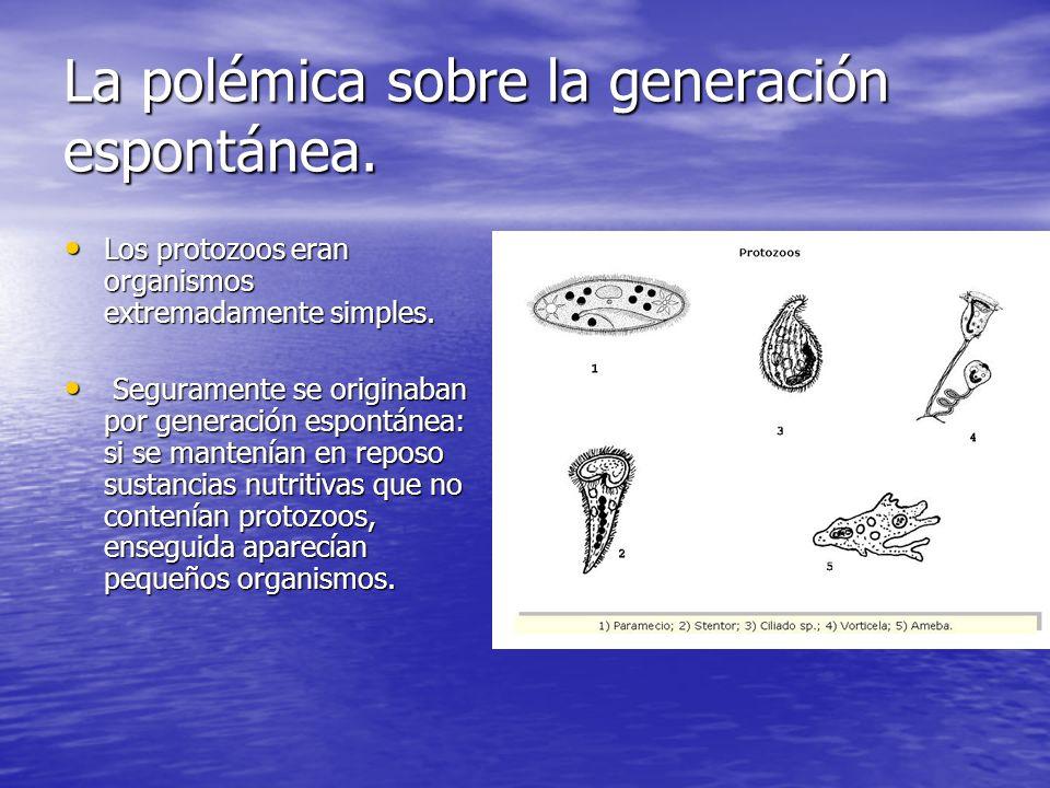 La polémica sobre la generación espontánea. Los protozoos eran organismos extremadamente simples. Los protozoos eran organismos extremadamente simples