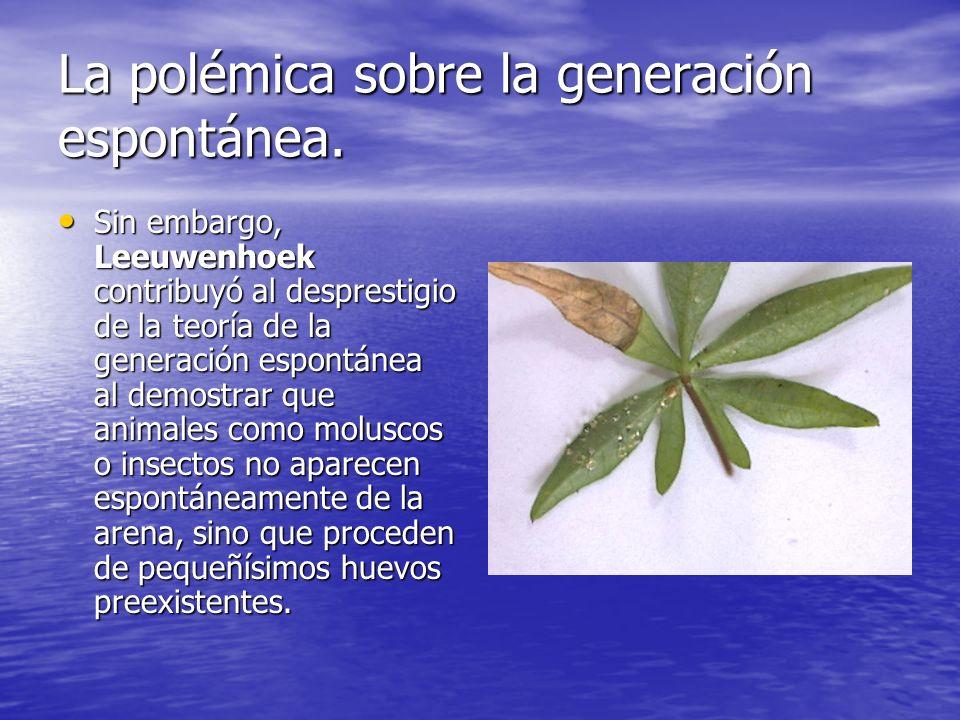 La polémica sobre la generación espontánea. Sin embargo, Leeuwenhoek contribuyó al desprestigio de la teoría de la generación espontánea al demostrar