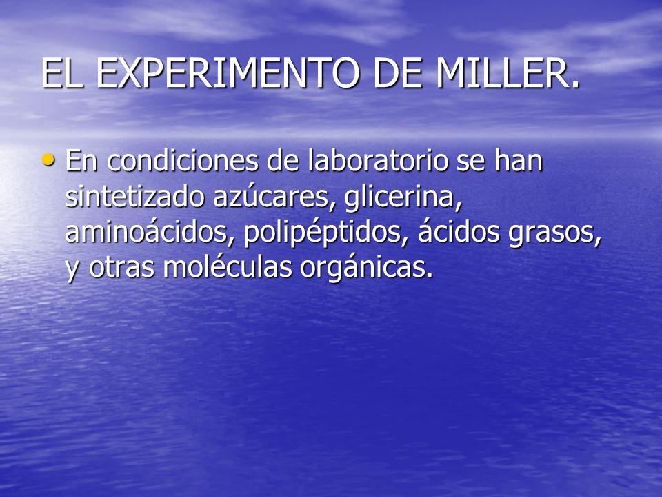 EL EXPERIMENTO DE MILLER. En condiciones de laboratorio se han sintetizado azúcares, glicerina, aminoácidos, polipéptidos, ácidos grasos, y otras molé