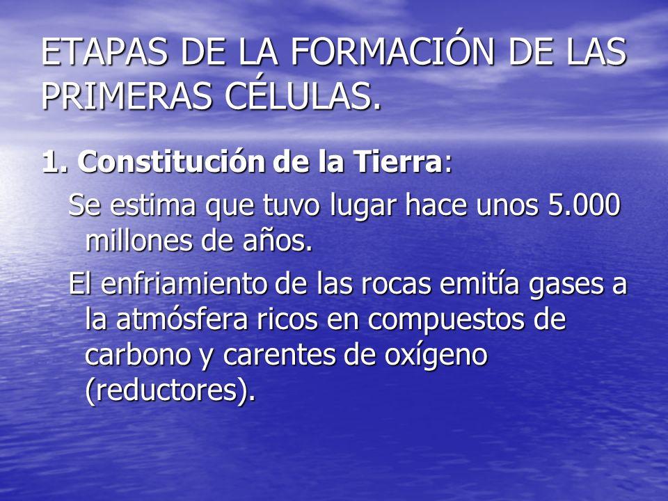 ETAPAS DE LA FORMACIÓN DE LAS PRIMERAS CÉLULAS. 1. Constitución de la Tierra: Se estima que tuvo lugar hace unos 5.000 millones de años. Se estima que