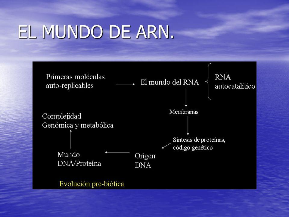 EL MUNDO DE ARN.