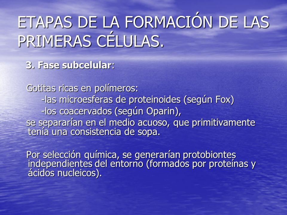 ETAPAS DE LA FORMACIÓN DE LAS PRIMERAS CÉLULAS. 3. Fase subcelular: 3. Fase subcelular: Gotitas ricas en polímeros: Gotitas ricas en polímeros: -las m