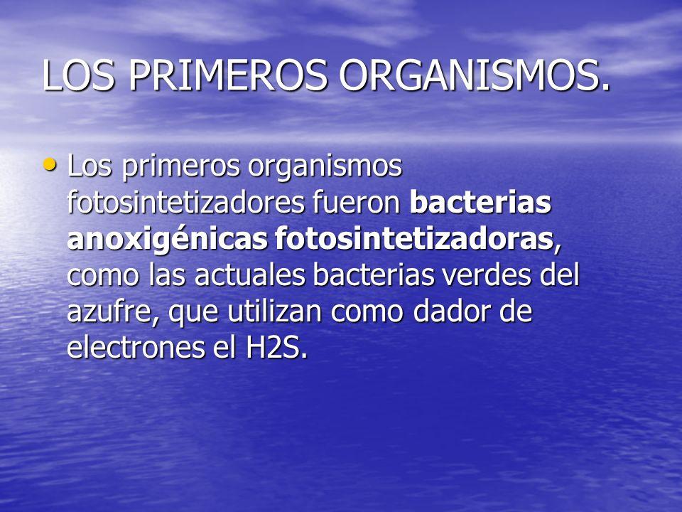 LOS PRIMEROS ORGANISMOS. Los primeros organismos fotosintetizadores fueron bacterias anoxigénicas fotosintetizadoras, como las actuales bacterias verd