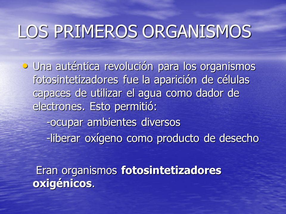 LOS PRIMEROS ORGANISMOS Una auténtica revolución para los organismos fotosintetizadores fue la aparición de células capaces de utilizar el agua como d