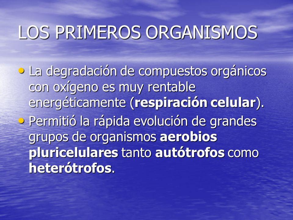LOS PRIMEROS ORGANISMOS La degradación de compuestos orgánicos con oxígeno es muy rentable energéticamente (respiración celular). La degradación de co