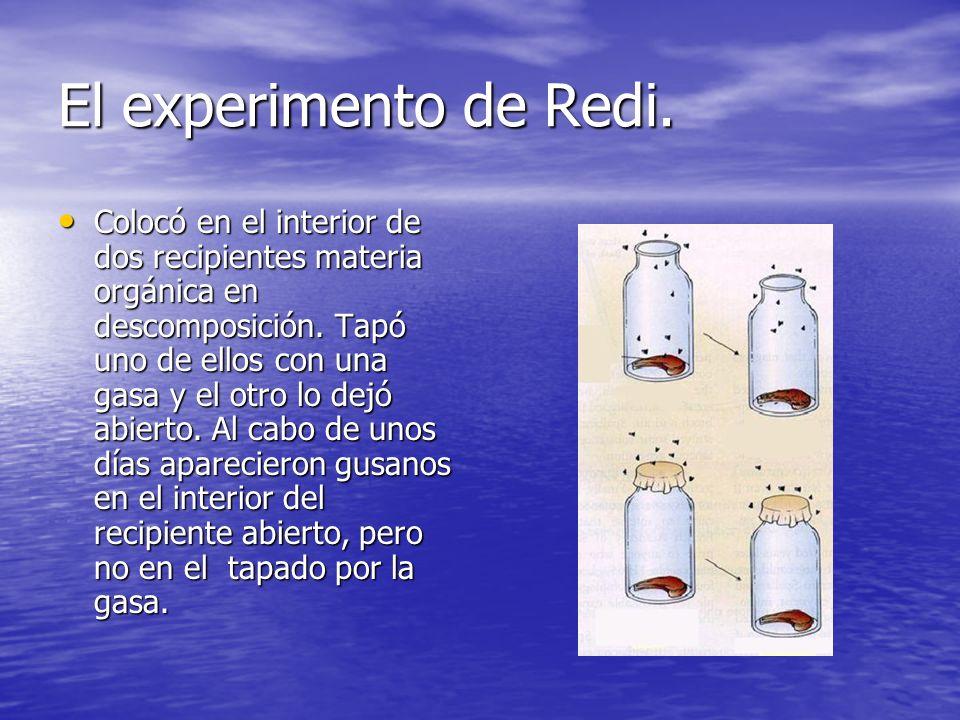 El experimento de Redi. Colocó en el interior de dos recipientes materia orgánica en descomposición. Tapó uno de ellos con una gasa y el otro lo dejó