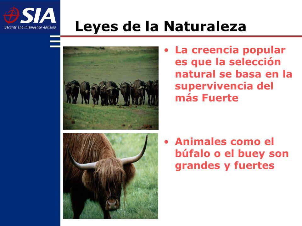 La creencia popular es que la selección natural se basa en la supervivencia del más Fuerte Animales como el búfalo o el buey son grandes y fuertes Leyes de la Naturaleza