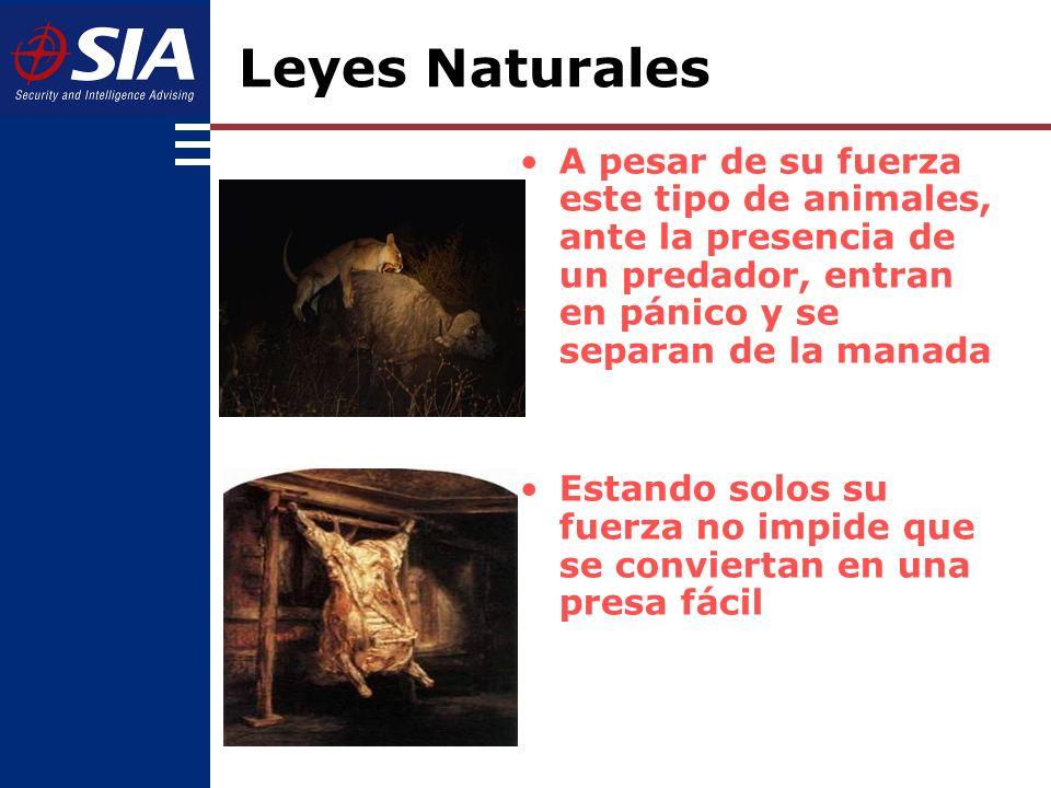 La selección natural no implica la supervivencia del más fuerte, sino la supervivencia del más APTO Leyes Naturales