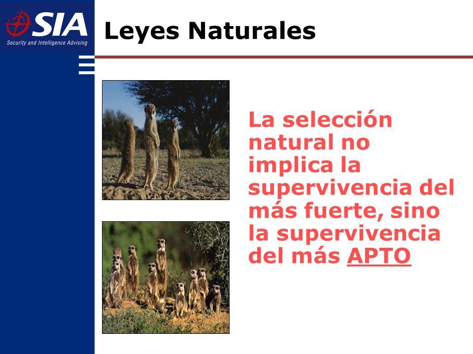 Animales como la Suricata, de escasa fortaleza física, muchas veces son más APTOS para sobrevivir los ataques de los predadores que animales como el buey.
