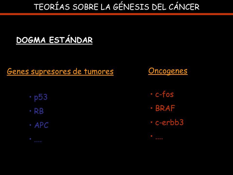 TEORÍAS SOBRE LA GÉNESIS DEL CÁNCER DOGMA ESTÁNDAR Genes supresores de tumores Oncogenes p53 RB APC.... c-fos BRAF c-erbb3....