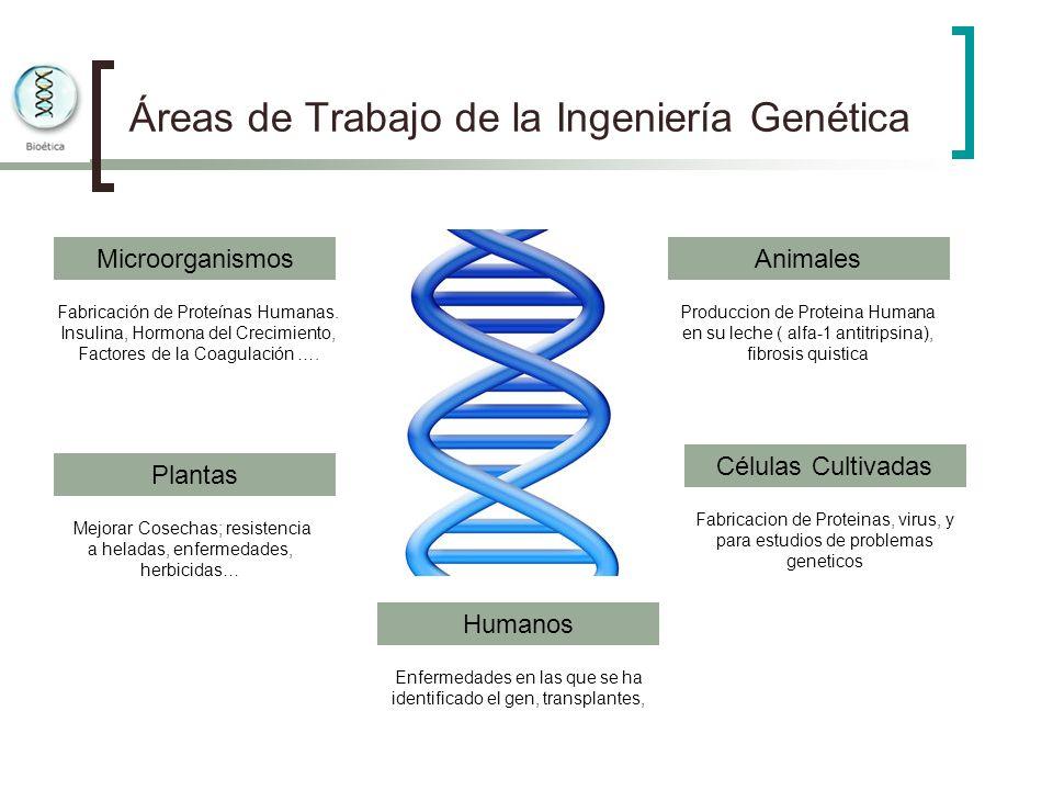 Áreas de Trabajo de la Ingeniería Genética Microorganismos Plantas Animales Células Cultivadas Humanos Fabricación de Proteínas Humanas. Insulina, Hor